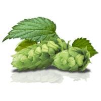 https://www.birrificiomarduk.com/wp-content/uploads/2020/05/08b_Luppolo_Marduk_brewery_birrificio_agricolo_guarda_oltre_birre_Irgoli_Sardegna.jpg