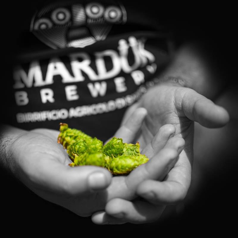 https://www.birrificiomarduk.com/wp-content/uploads/2020/05/14a_Orzo_Marduk_brewery_birrificio_agricolo_guarda_oltre_birre_Irgoli_Sardegna.jpg