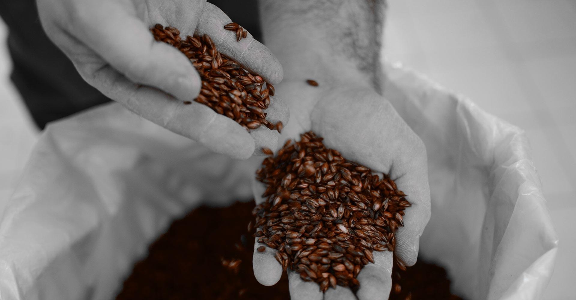 https://www.birrificiomarduk.com/wp-content/uploads/2020/06/01-marduk-brewery-agricoltura-filiera-materie-prime-birrificio-birre-1.jpg